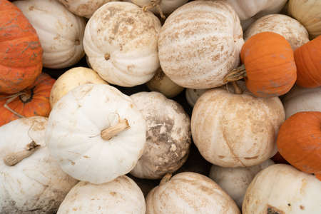 We know fall is here when displays full of Pumpkins and Gourds show up at the market Stock fotó - 112552692