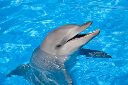 dolphin: A happy Bottlenose Dolphin laughing and showing the teeth Stock Photo