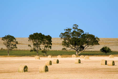 Haybales in a paddock in outback Australia Stock Photo