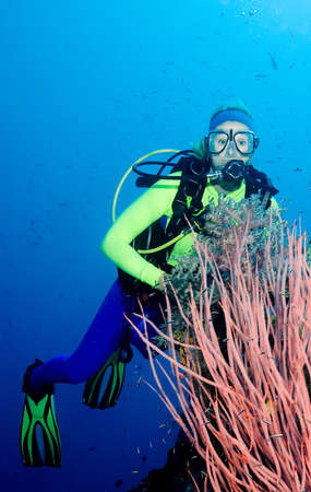 a pretty female scuba diver with pink sea whips, fish, and blue water Stock Photo