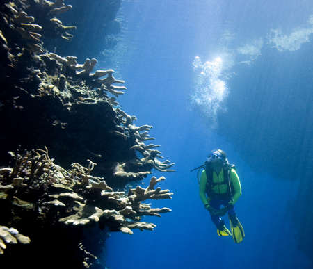 scuba diver: a pretty female scuba diver swimming between underwater cliffs and looking at coral. the wall is lit by bright sunbeams,