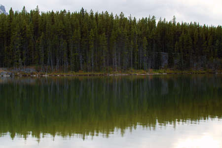 Pine Tree Forest Reflection on Water Surface at Herbert Lake