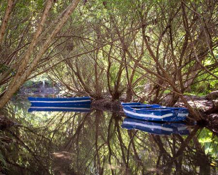 riverside tree: Reflections