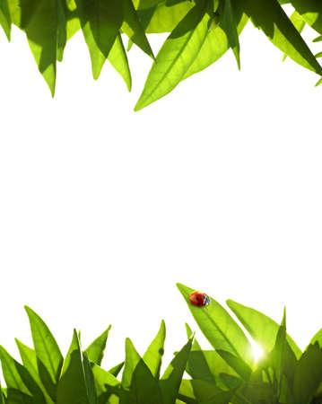 flower ladybug: Foliage frame with orange-tree leafs and ladybug