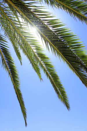 Photo of several palm tree leafs over bright blue sky photo