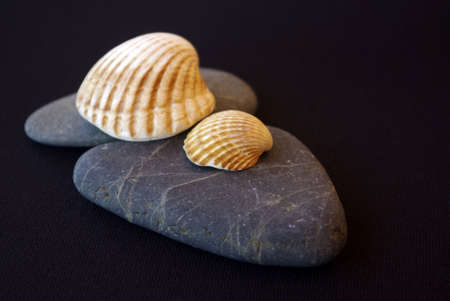 Two stones and two seashells over black background Stock Photo - 2426885
