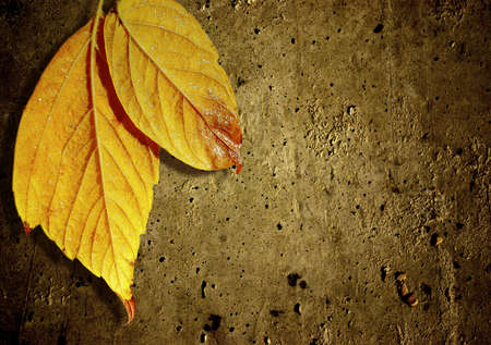 Grungy background with two yellow autumn leafs.