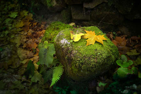 Edilic autumn scene with fallen leafs on a rock in a park. photo