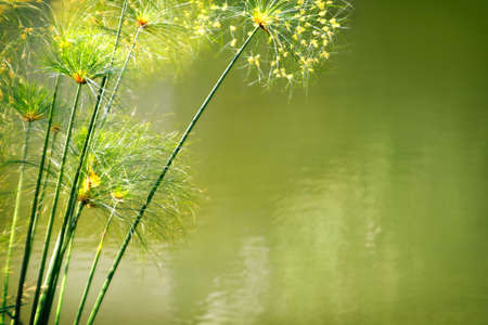 Photo of green water foliage with side copyspace photo
