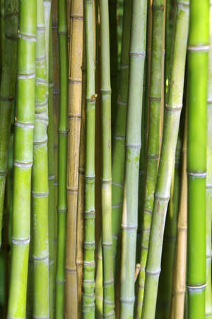 hollow wall: Close-up photo of background of green bamboo canes Stock Photo