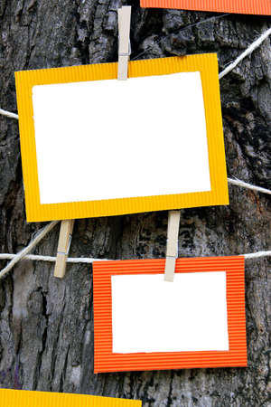 grunge photo frame: Two colorful paper photo frames hanging on a pine tree Stock Photo