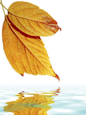 Close up of yellow fall leafs over calm water with reflection Stock Photo - 2426982