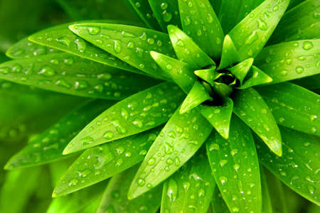 Close-up of fresh green foliage with water drops after rain photo