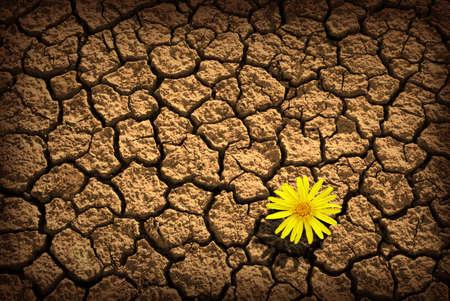 erde gelb: Muster der gerissenen und getrocknete Erde Mit einer Sigle Blume Lizenzfreie Bilder