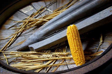separator: Corn cob and wheat spikes on old wooden grain separator