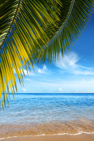 Beautiful tropical beach with clear ocean and palm trees Stock Photo - 3280857