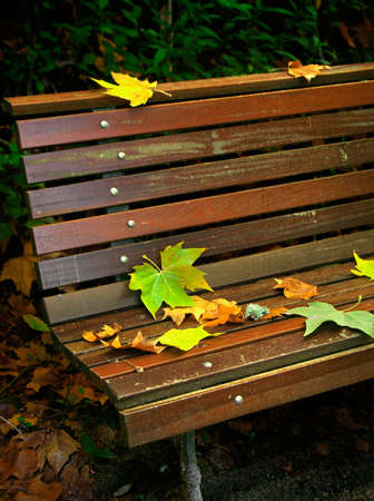 Detail of fall Leafs on a brown wooden bench. photo