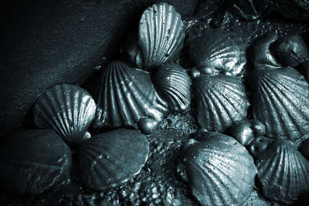 spill: Close-up on sea shells after oil spill Stock Photo