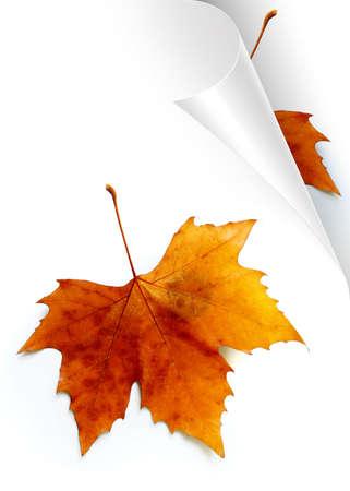 foglio bianco: Passando pagina del foglio di carta bianco mostrando Caduta foglie Archivio Fotografico