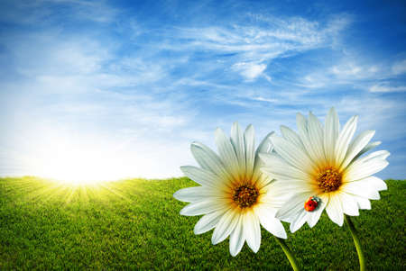 Spring grass field with two daisies and a lady-bug Stock Photo