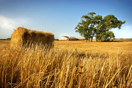 Golden hay stack in a rural field with old house and tree photo