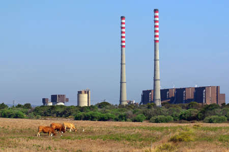 A thermoelectric plant with big chimneys in a rural landscape with cows