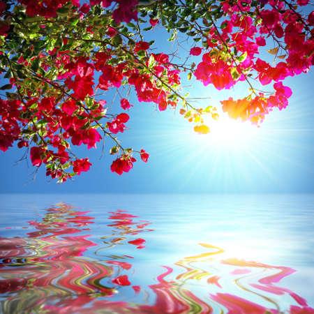 jardines con flores: Rama de geranio de red con el sol que se refleja en el agua  Foto de archivo