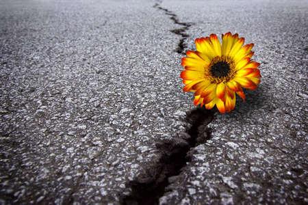 Schöne Blume growing on Crack in alten Asphalt-Pflaster