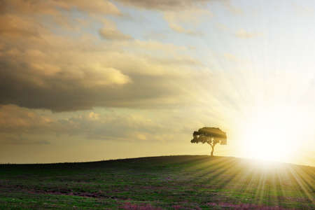 dusky: Rural landscape with silhouette of a single tree in a hill at sunset