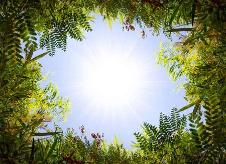 Green foliage frame over sunny blue sky photo