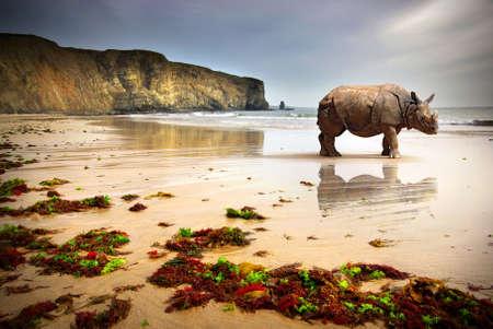 Surreal scene of a big Rhinoceros in an empty beach photo