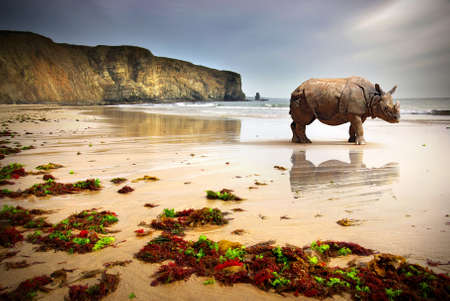 Surreal scene of a big Rhinoceros in an empty beach