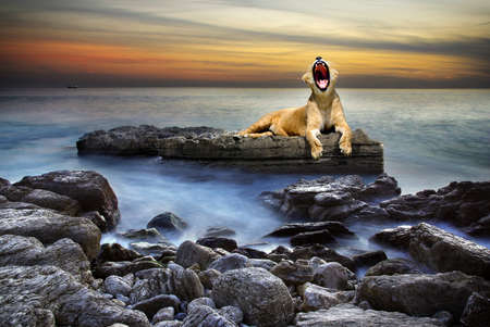 roar: Surreal coastal scene with a lion resting on a rock surrounded by the sea