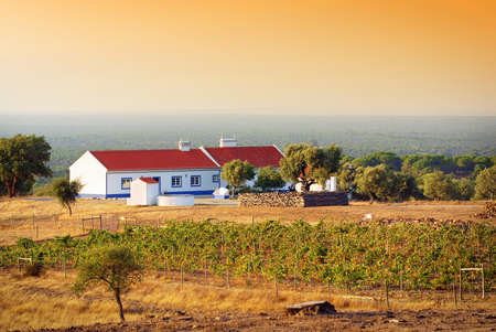 traditional house: Countryside scenery with a white traditional house and a vineyard