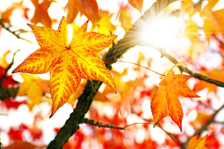 Nature background of bright and colorful Fall leaves
