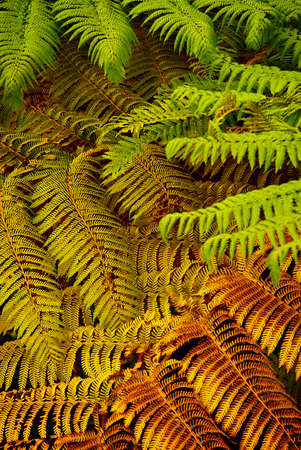 overlapped: colorful background of overlapped fern leaves after rain