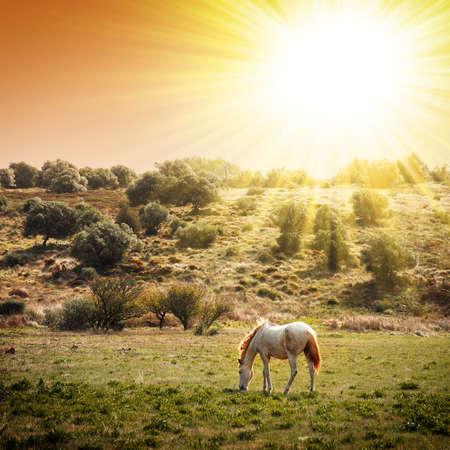Caballo blanco pastoreo en un paisaje rural bajo el c�lido sol Foto de archivo - 8923399