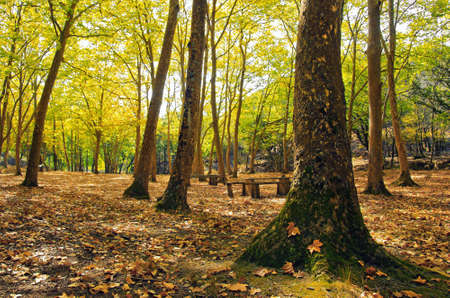 Natural Park in Autumn with with trees and deciduous leaves Stock Photo - 10987672
