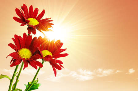 Three red flowers under the bright sun-rays and a warm sky photo
