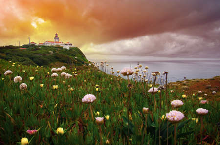 Wild flowers and a lighthouse at dawn in the cliffs of Roca Cape in Portugal photo