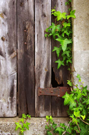 Old broken door of a ruined house with a frame of green foliage photo