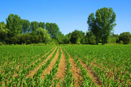 Cultivated land in a rural landscape in a bright sunny day photo