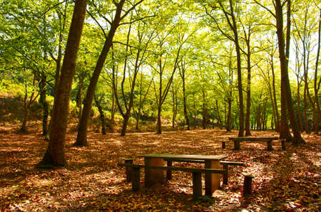 Natural Park in Autumn with with trees and deciduous leaves Stock Photo - 15253259