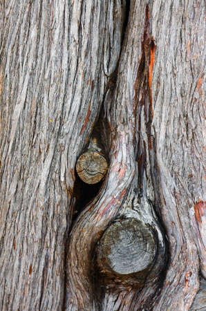 Closeup detail of a dead tree trunk knot from old branch  photo