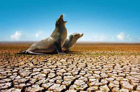 Two seals suffering from the lack of water in a hot and dry environment Archivio Fotografico