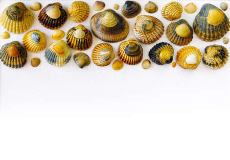 Bar of sea shells in upper border over white background  photo