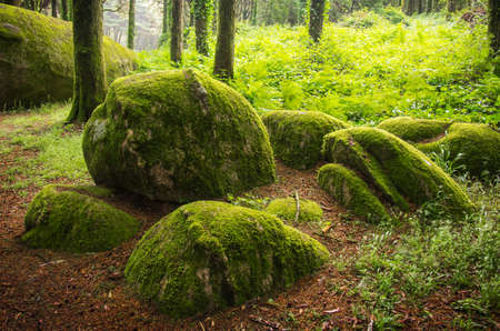 Landscape of natural forest in Sintra Hills, Portugal 版權商用圖片