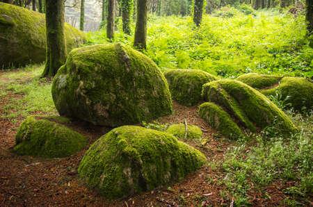 Landscape of natural forest in Sintra Hills, Portugal Standard-Bild