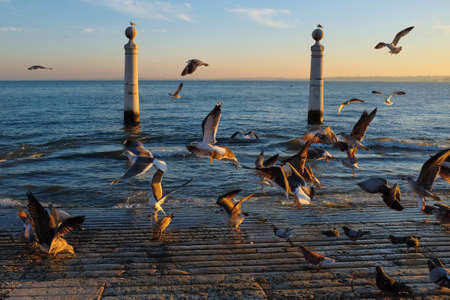 estuary: Lisbon landmark Columns Dock with many seagulls at sunset Stock Photo