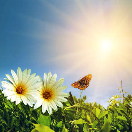 Green foliage with two daisies and butterfly under sunny blue sky